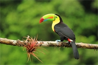 Costa Rica: A paradise for eco-tourists